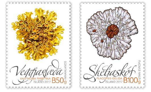 653A (left) - Common orange lichen (Xanthoria parietina) 653B (right) - Bullseye lichen (Placopsis gelida)