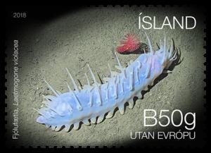 669B - Sea cucumber